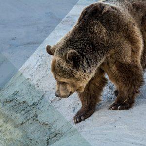 Bear With Us 2560x1707